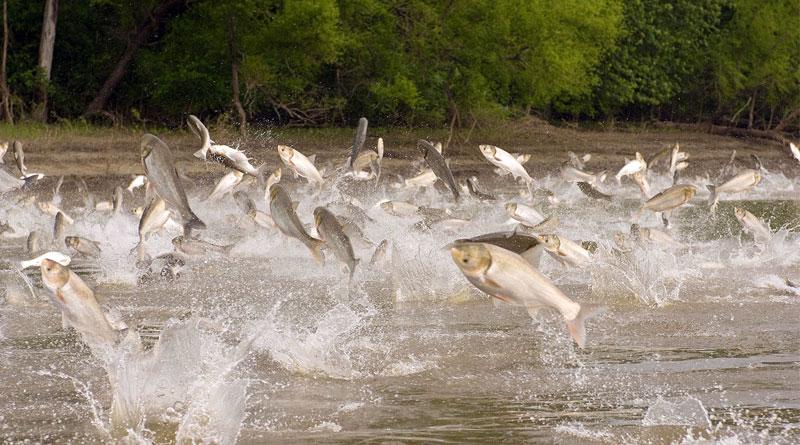 ثروت اندوزی بدون شکست! / از صفر تا صد پرورش کپور ماهیان در استخرهای خاکی