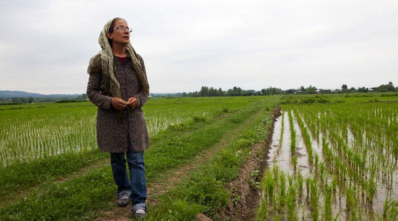 برنجکاری که نمی خواست حقوق بگیر باشد