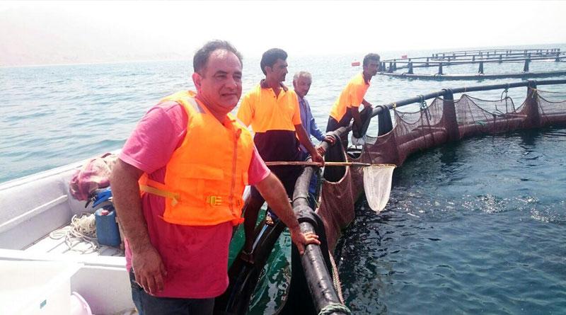 پرورش پرهزینه اما پرسود ماهی در قفس