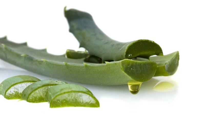 تولید آلوئهورا یا گیاه هزارمعجزه یک فرصت سرمایهگذاری جذاب