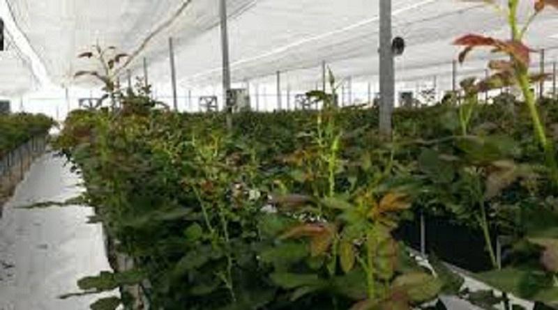 کارآفرین موفق خرمشهری که کار خود را از فروش فلافل به تولید گل و گیاه تغییر داد