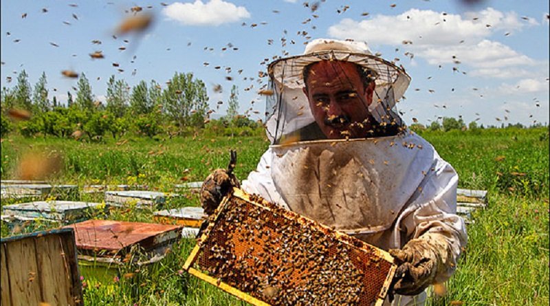 پرورش زنبورعسل؛ کارآفرینی آسان با سرمایه کم