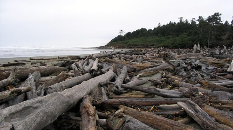 کسب و کار دکوراسیون فانتزی با چوبهای ساحلی