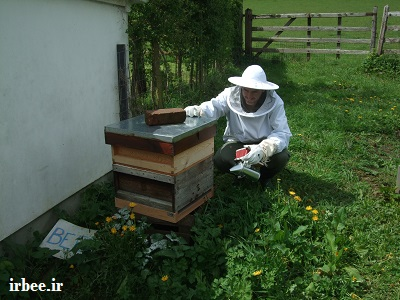 نکات مهم پرورش زنبور عسل (زنبورداری) برای تازهکاران