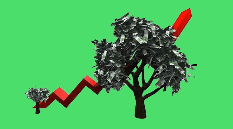 پول درآوردن از پرورش سریعالرشدترین درخت دنیا