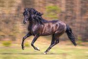 صنعت سود آور اسب،زیر بنای ورزش،اقتصاد و اشتغال