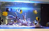 آیا میتوان با یک آکواریوم خانگی کسب درآمد کرد؟ پرورش ماهی زینتی چقدر درآمد دارد؟
