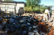 کسب درآمد روزانه سیصد هزار تومان از حیاطی دویست متری در روستا