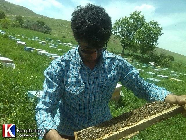 پرورش زنبور عسل در سرما و گرما