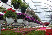 این بانوی کارآفرین پرورش گل را از زمین دیم آغاز کرده است