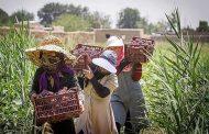 تجربه یک زن کارآفرین در روستایی کوچک
