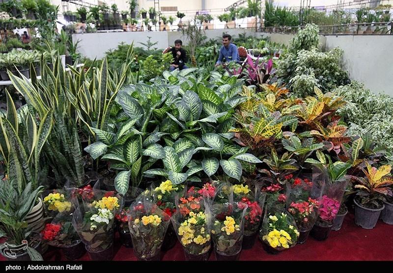 درآمد ۱۵ میلیون تومانی با پرورش گیاهان زینتی؛ همت بانوی جوان اهل قیروکارزین در کارآفرینی