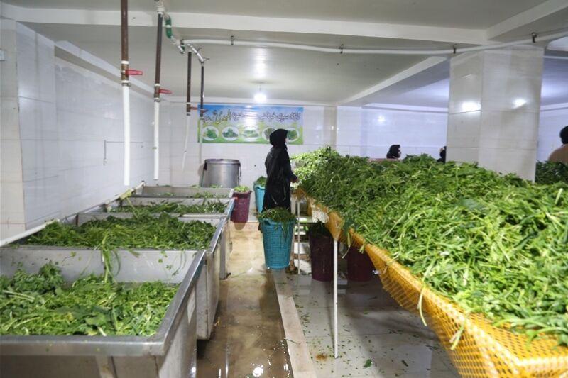 «سبزیخرد کنی» کسب درآمد با کمترین سرمایه