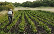 کسب درآمد از طریق پرورش سبزیجات؛ کاشت، برداشت و فروش موفق