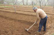 تولید سبزی ارگانیک در خلخال